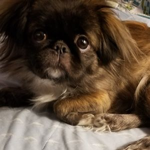 IF ANYONE NEEDS ME. YES ITS AVAILABLE..not the dog